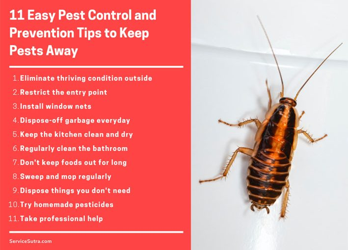 11 Easy Pest Control and Prevention Tips to Keep Pests Away from the House