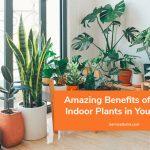 Amazing Benefits of Having Indoor Plants in Your Home