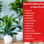 13 Best Air Purifying Houseplants to Clean the Air and Beautify Your Home