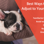 How to Help Dog and Puppy Adjust to Your New Home After Moving