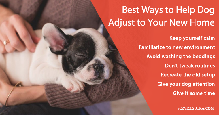How to help dog and puppy adjust to your new home