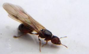 Pest Control Tips to get rid of common pests at home