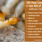 Get Rid of Termites without Chemicals - DIY Pest Control Tips