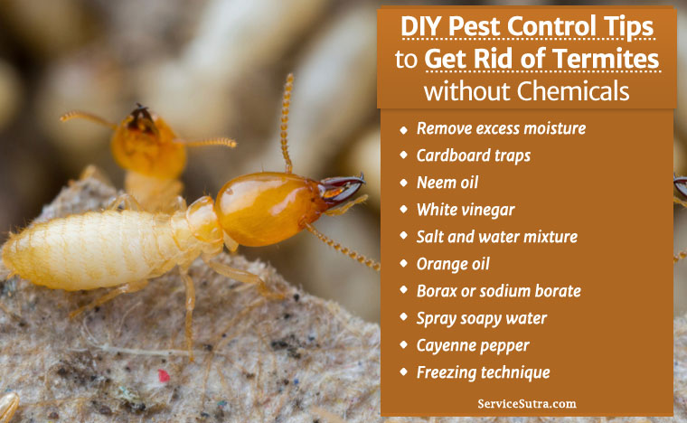 Get Rid Of Termites Without Chemicals Diy Pest Control Tips - How-to-remove-termites-from-furniture