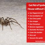 How to Get Rid of Spiders in the House without Chemicals