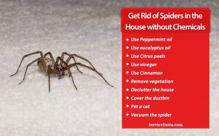 How to Get Rid of Spiders in the House Naturally Without Chemicals