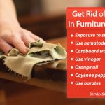 How to Get Rid of Termites in Furniture Naturally and Easily