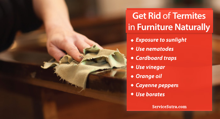 How To Get Rid Of Termites In Furniture Naturally On Your Own