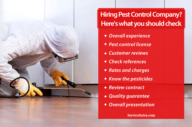 9 Important Things to Know When Hiring a Pest Control Company
