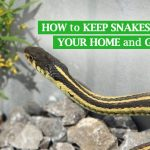 How to Keep Snakes Out of Your House and Garden Easily