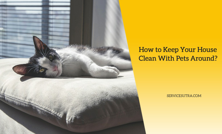 12 Tips on How to Keep Your House Clean With Pets at Home