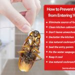 How to Prevent Cockroaches from Entering Your Kitchen