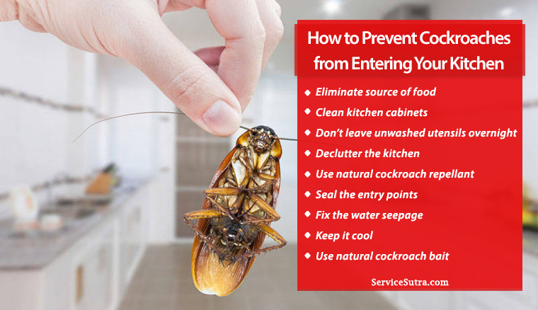 How To Prevent Cockroaches From Entering Your Kitchen Servicesutra