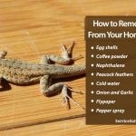 12 Natural Ways to Remove Lizards from Your Home Easily