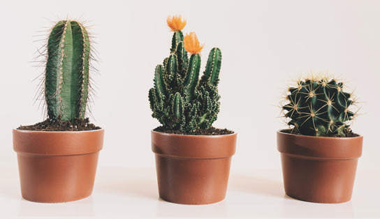 plants that requires minimum care