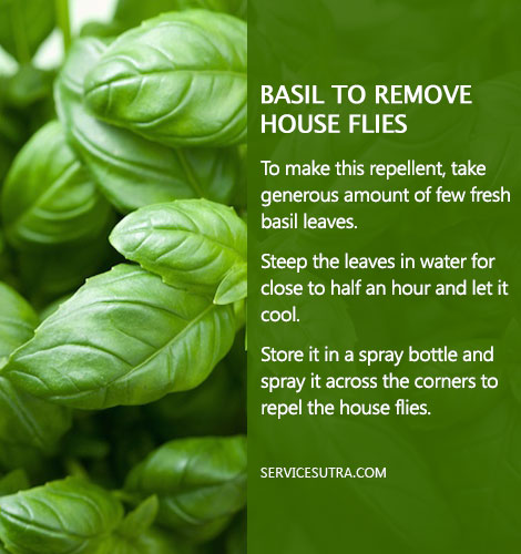 How to Get Rid of Flies from Home with Basil