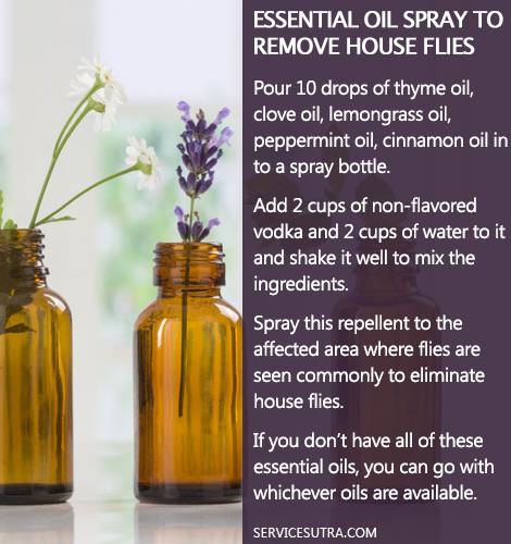 How to Get Rid of Flies from Home with Essential Oil