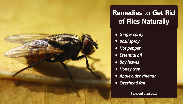 How to Get Rid Of Flies from Home Easily and Naturally