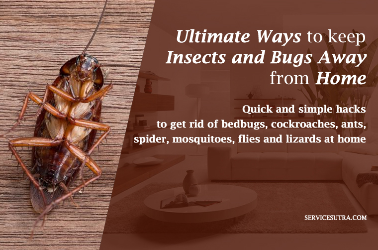 The Ultimate Guide to Keep Insects and Bugs Away from Home