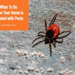 What To Do When Your Home is Infested with Pests